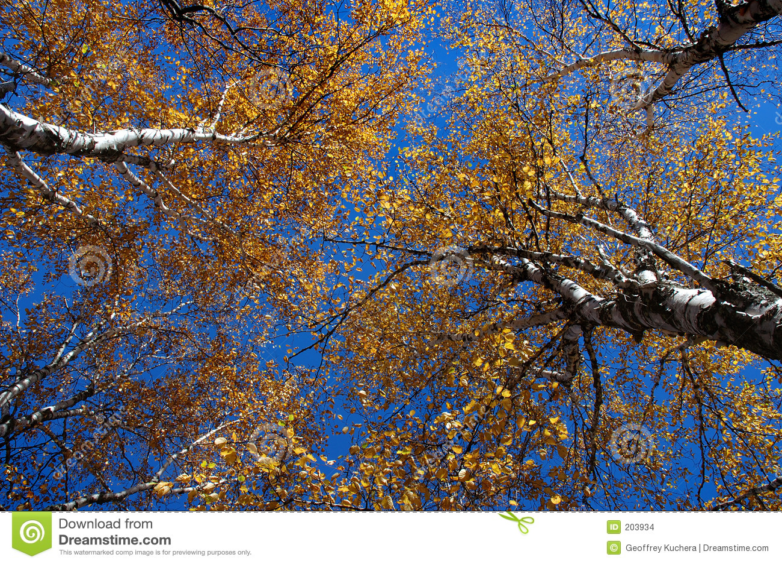Baldacchino di autunno