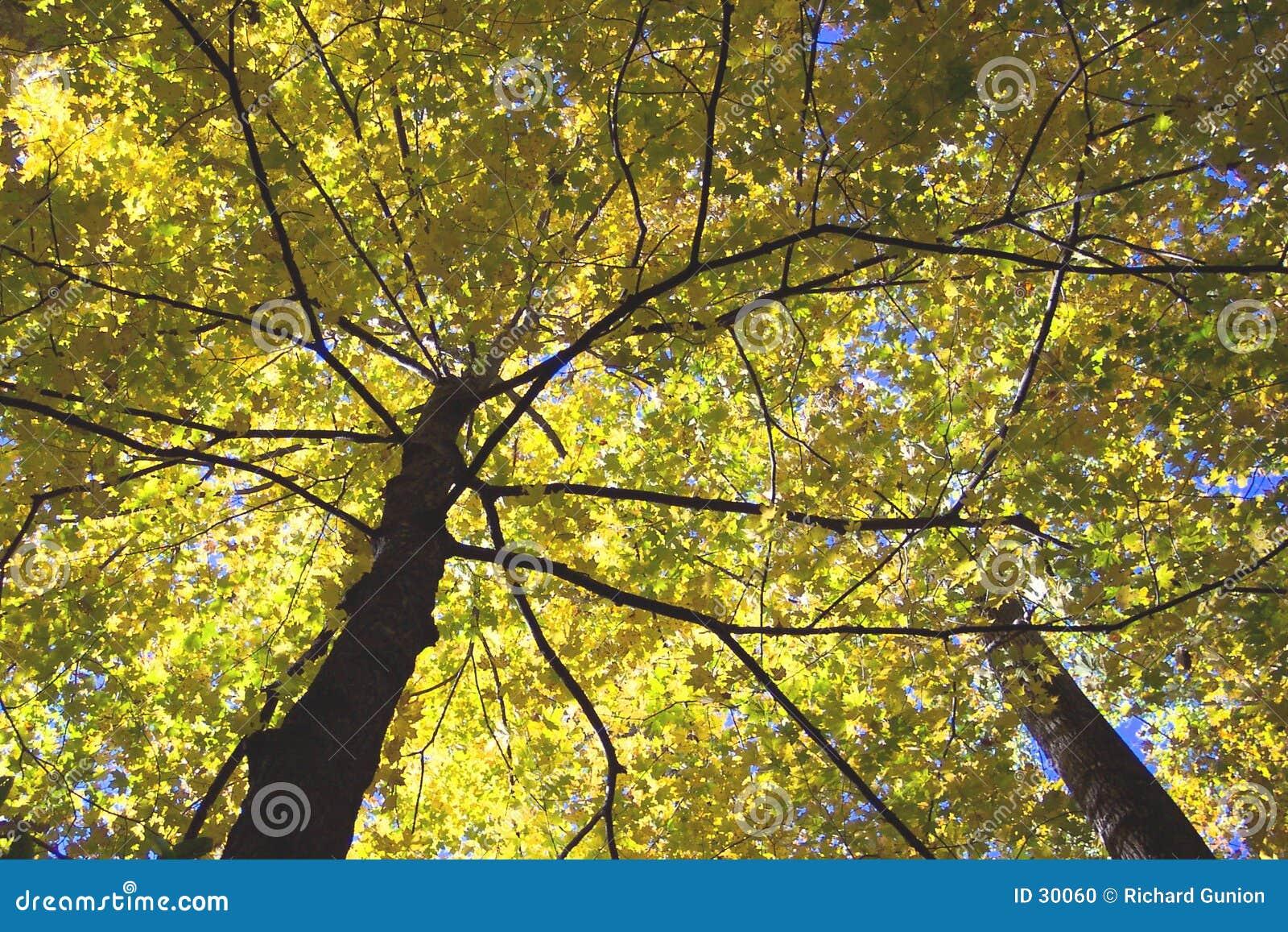 Baldachim jesieni