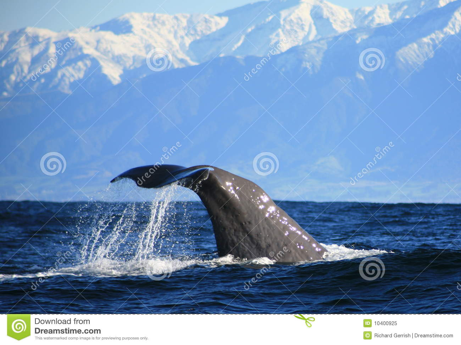 Baleia de esperma