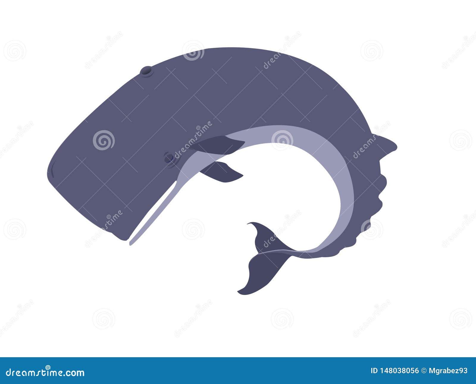 Baleia de esperma inoperante e ida