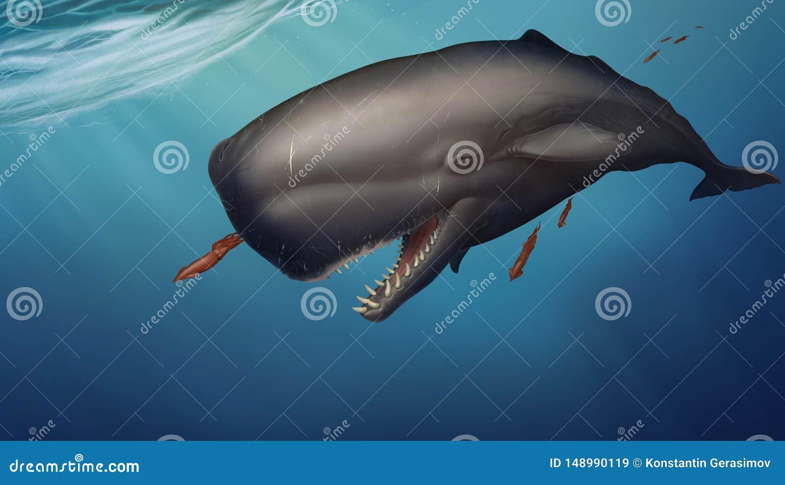 A baleia de esperma nada sob o calamar das capturas da ?gua em um fundo do oceano azul