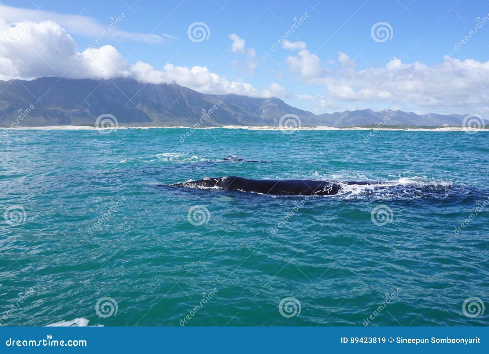 Baleia no oceano com fundo da montanha