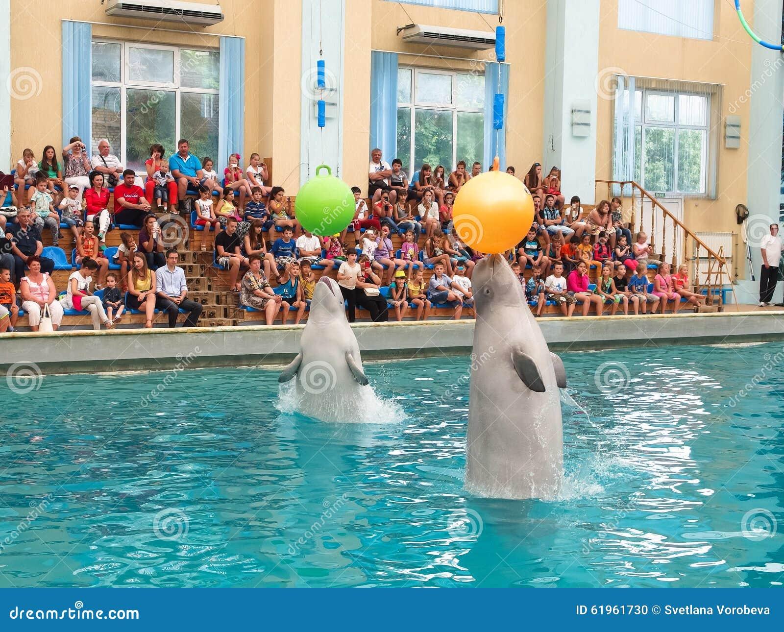 Baleias brancas