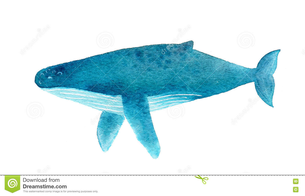 Baleine De Bosse Illustration D Aquarelle Illustration Stock