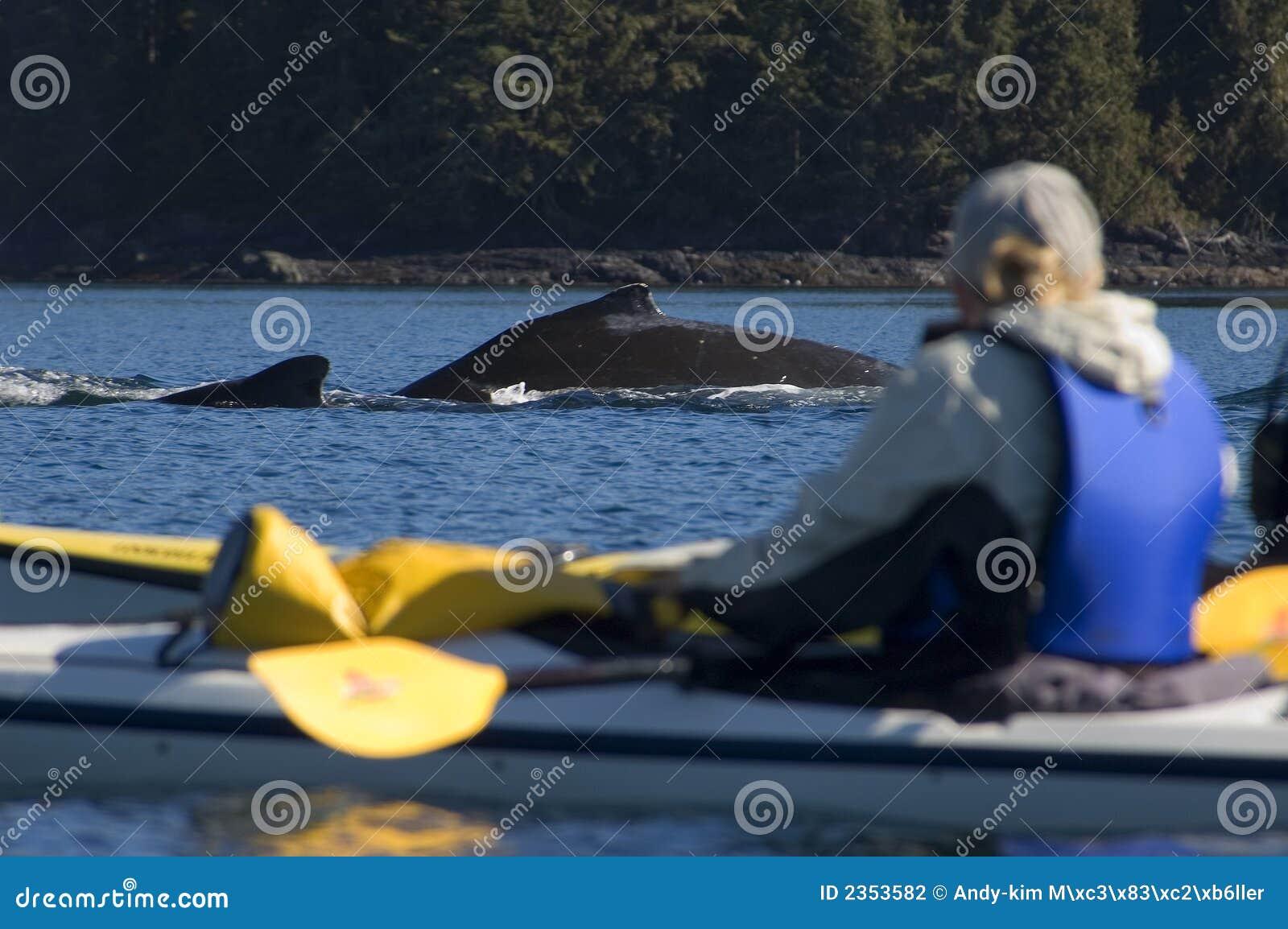 Baleine de kayak et de bosse