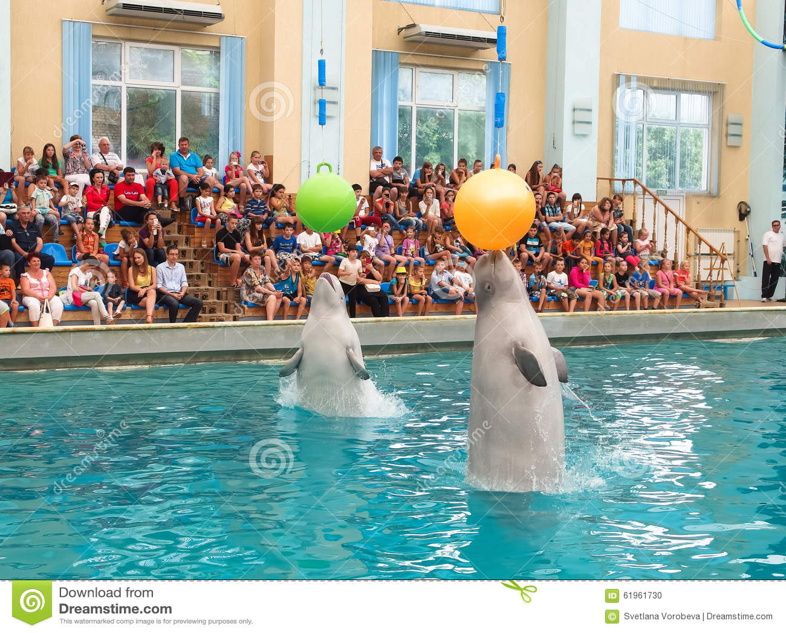 Baleines blanches