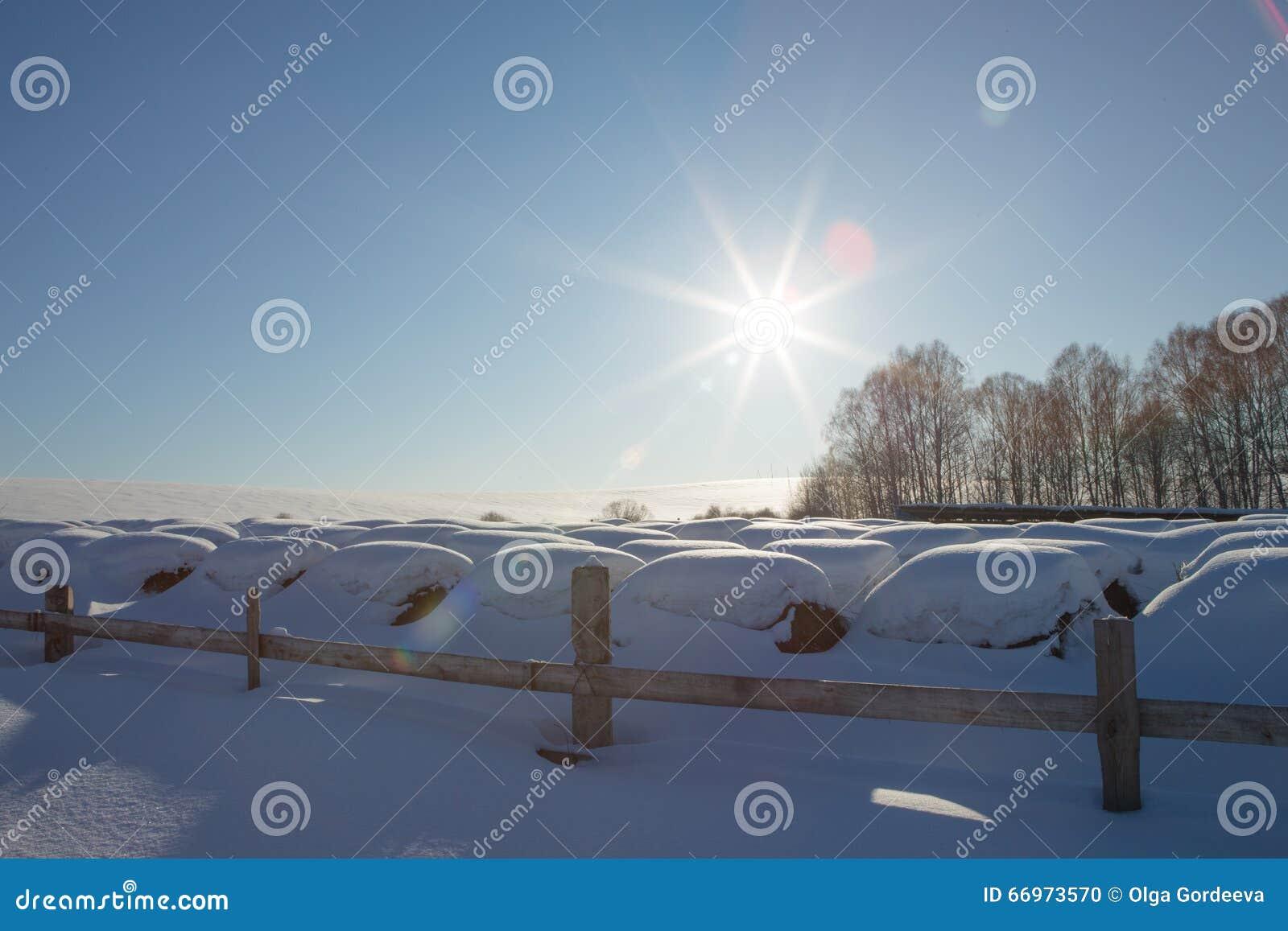 Baler av hö i ett vinterfält under snön höstackar i lantgården
