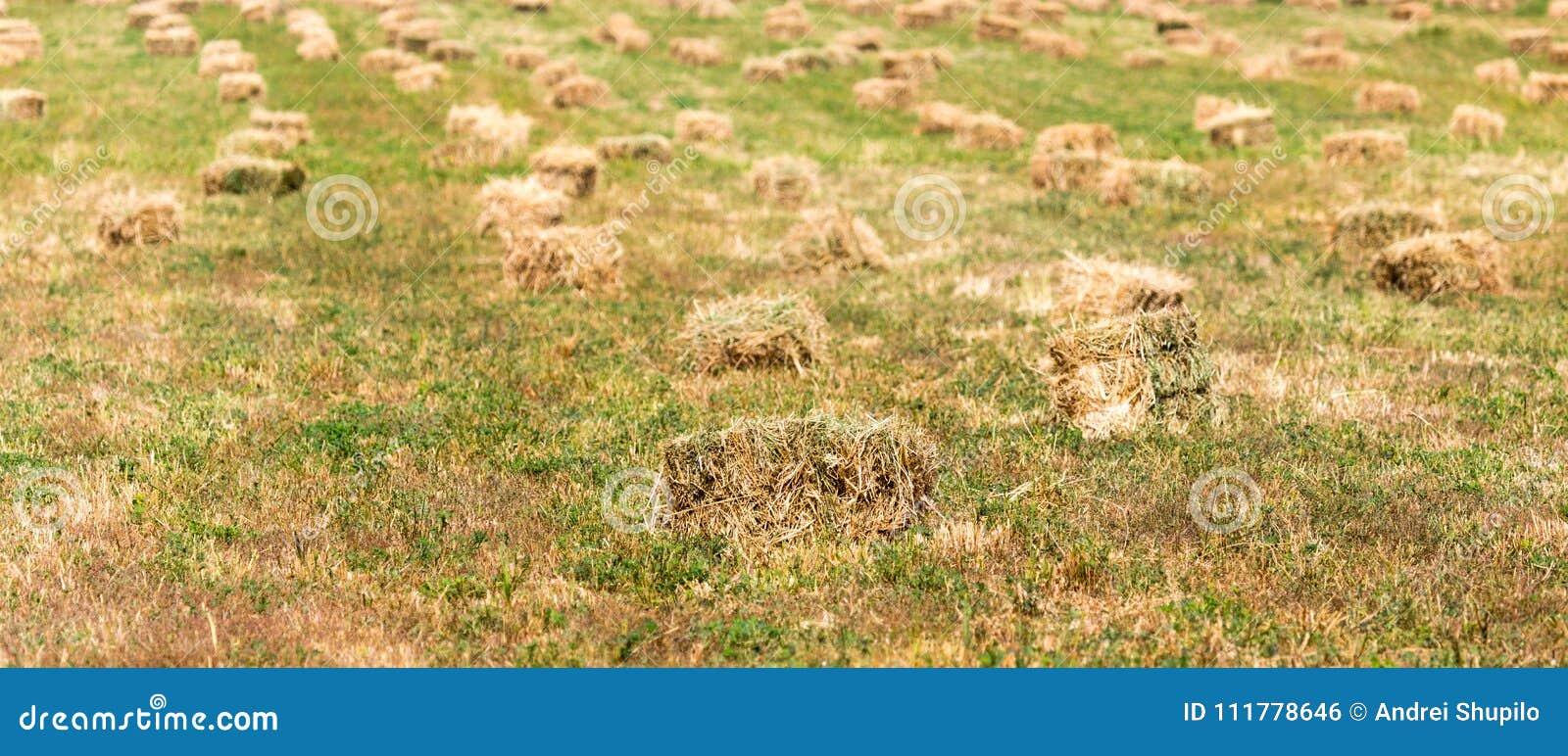 Baler av hö i fältet