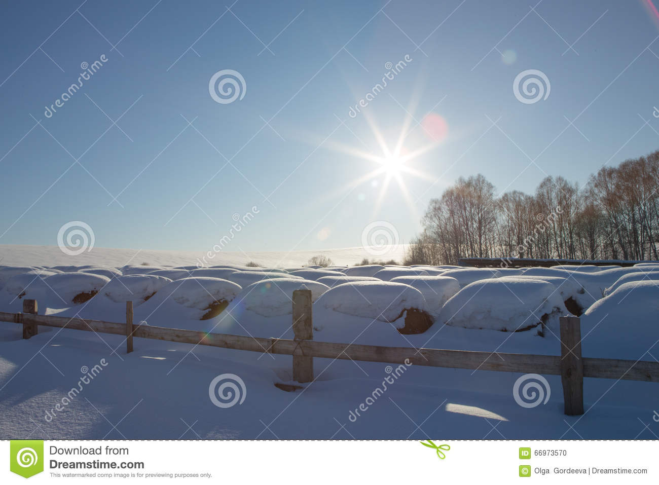 Bales of hay in a winter field under the snow. haystacks in the farm