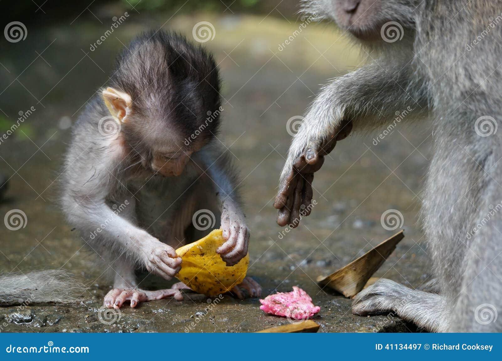 Bali małpy