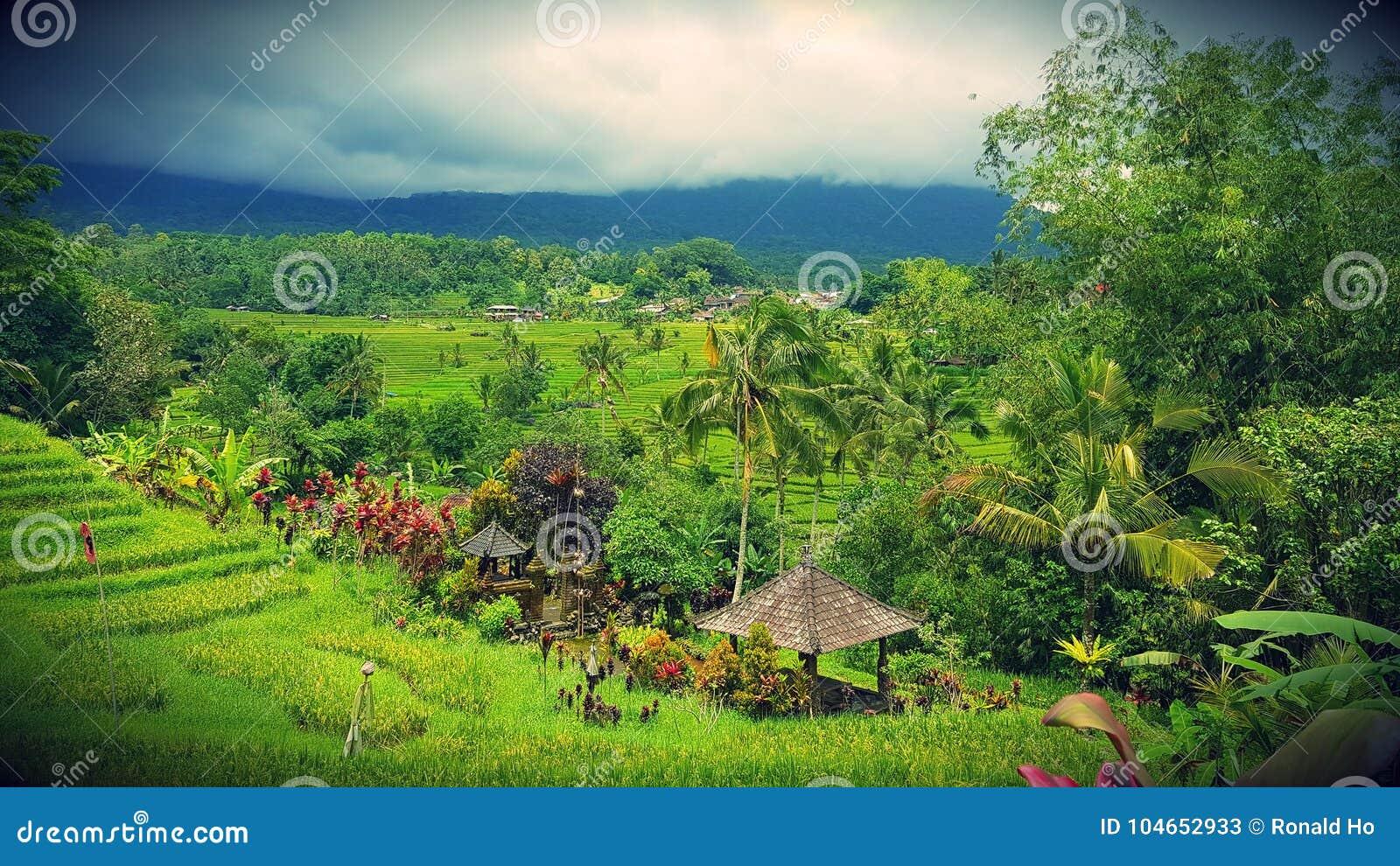 Bali pola ryżu