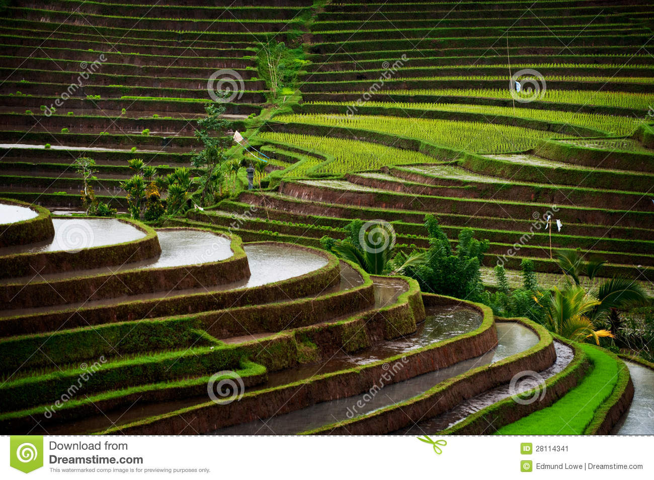 Download Bali Rice Field stock image. Image of exotic, green, background - 28114341