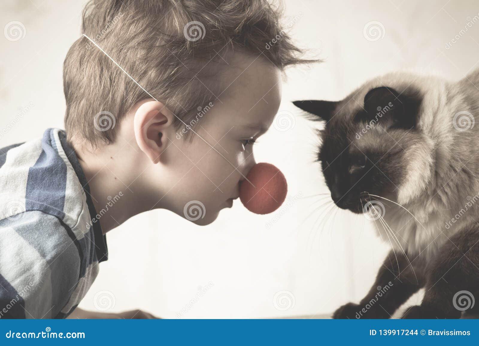 Balinese da criança do gato junto para jogar doméstico