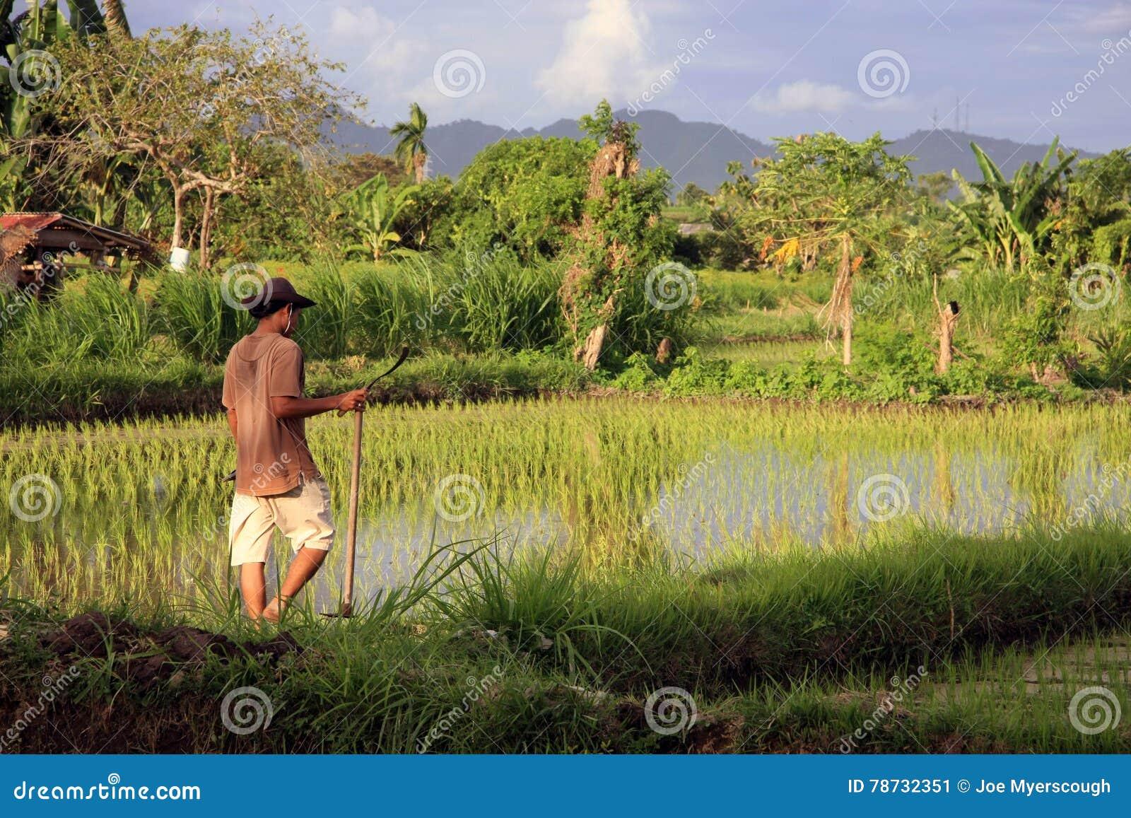 Balinesebonde med skäran