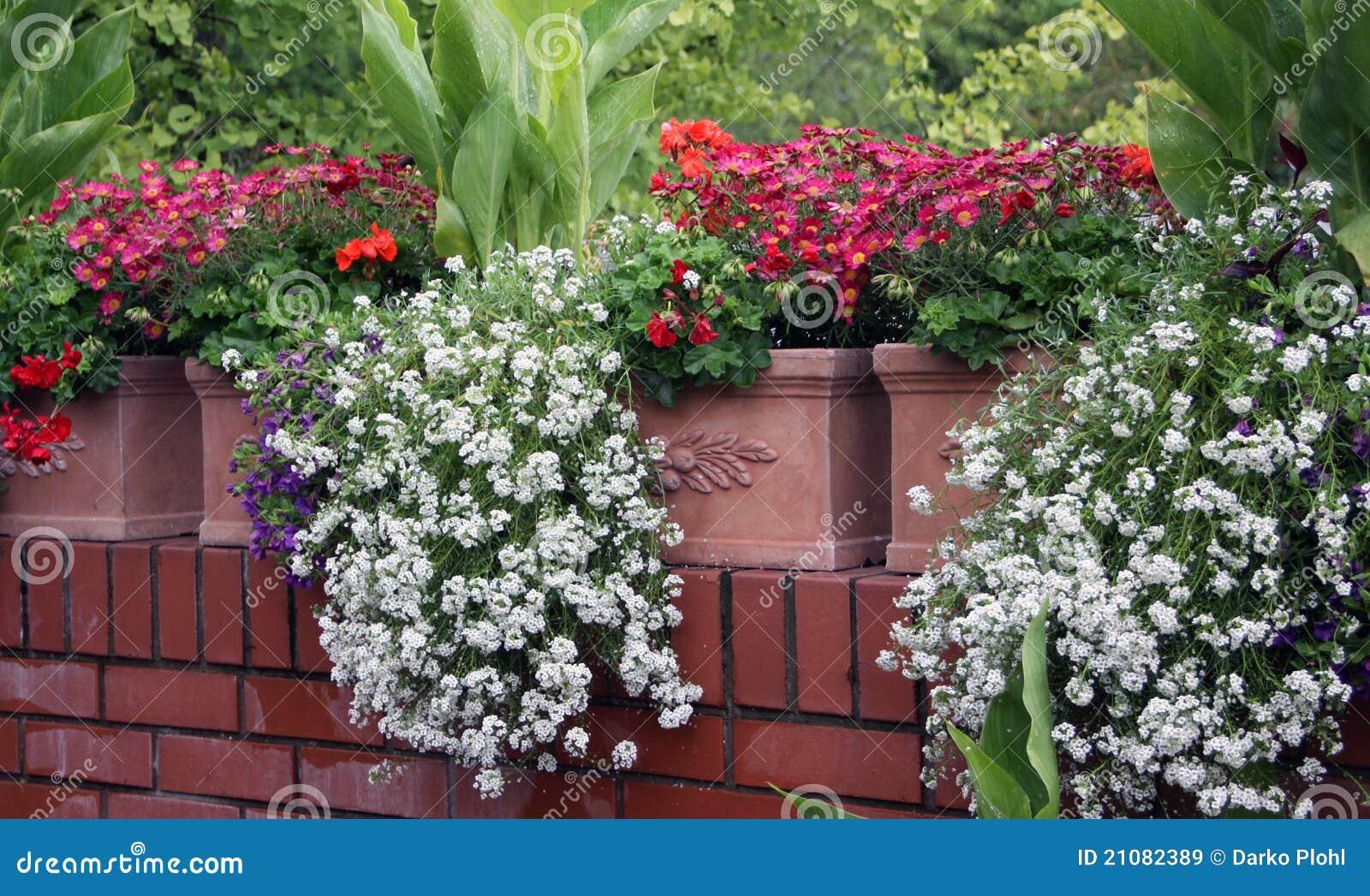 Balkonblumen Stockbild Bild Von Balkon Bluhen Terrasse 21082389