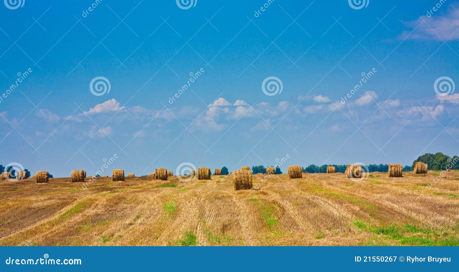 Balla rotonda di paglia nel campo