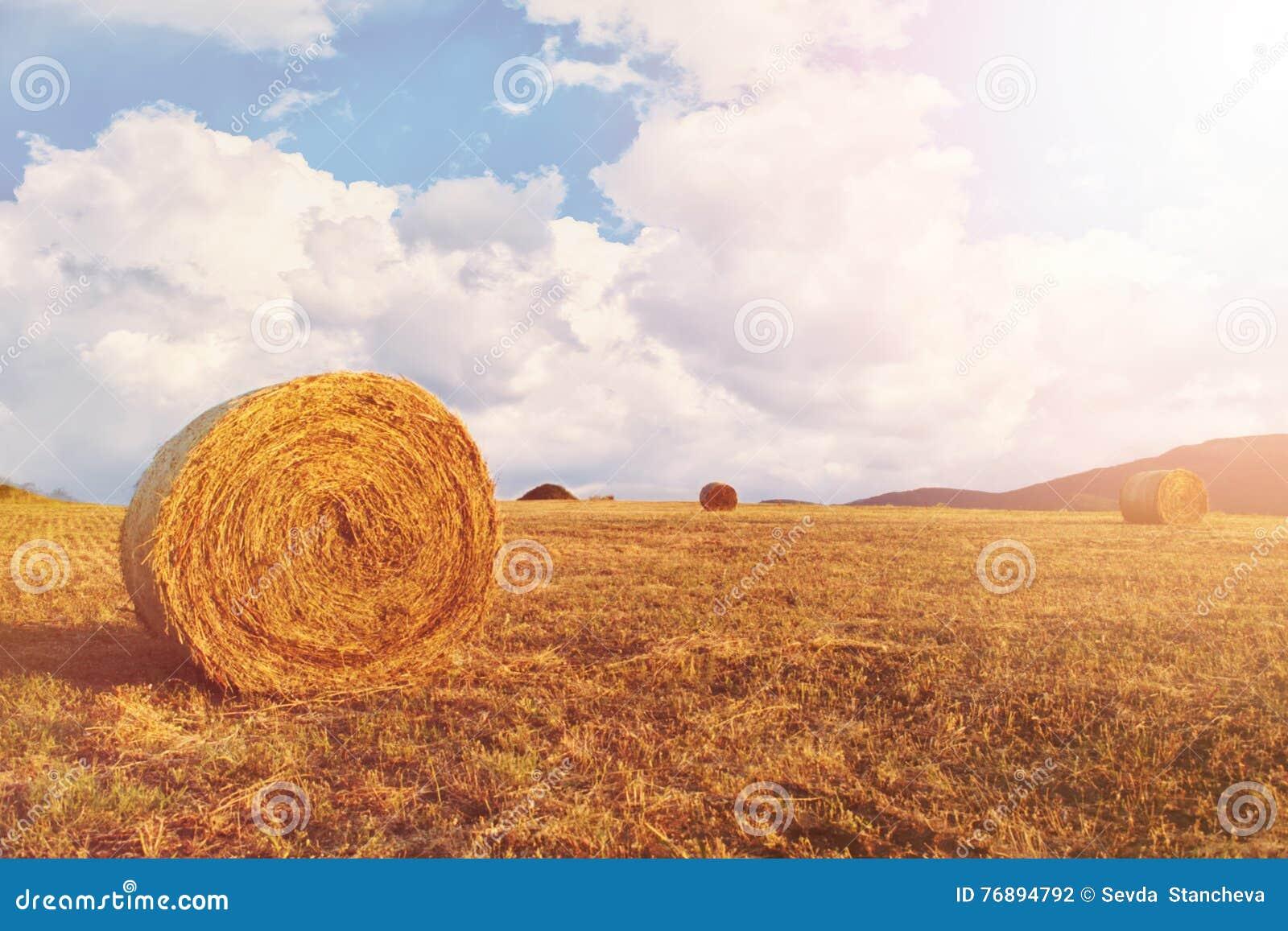 Balle di fieno sul campo dopo il raccolto, un chiaro giorno Cielo blu, nubi bianche Sun, foschia del sole, abbagliamento