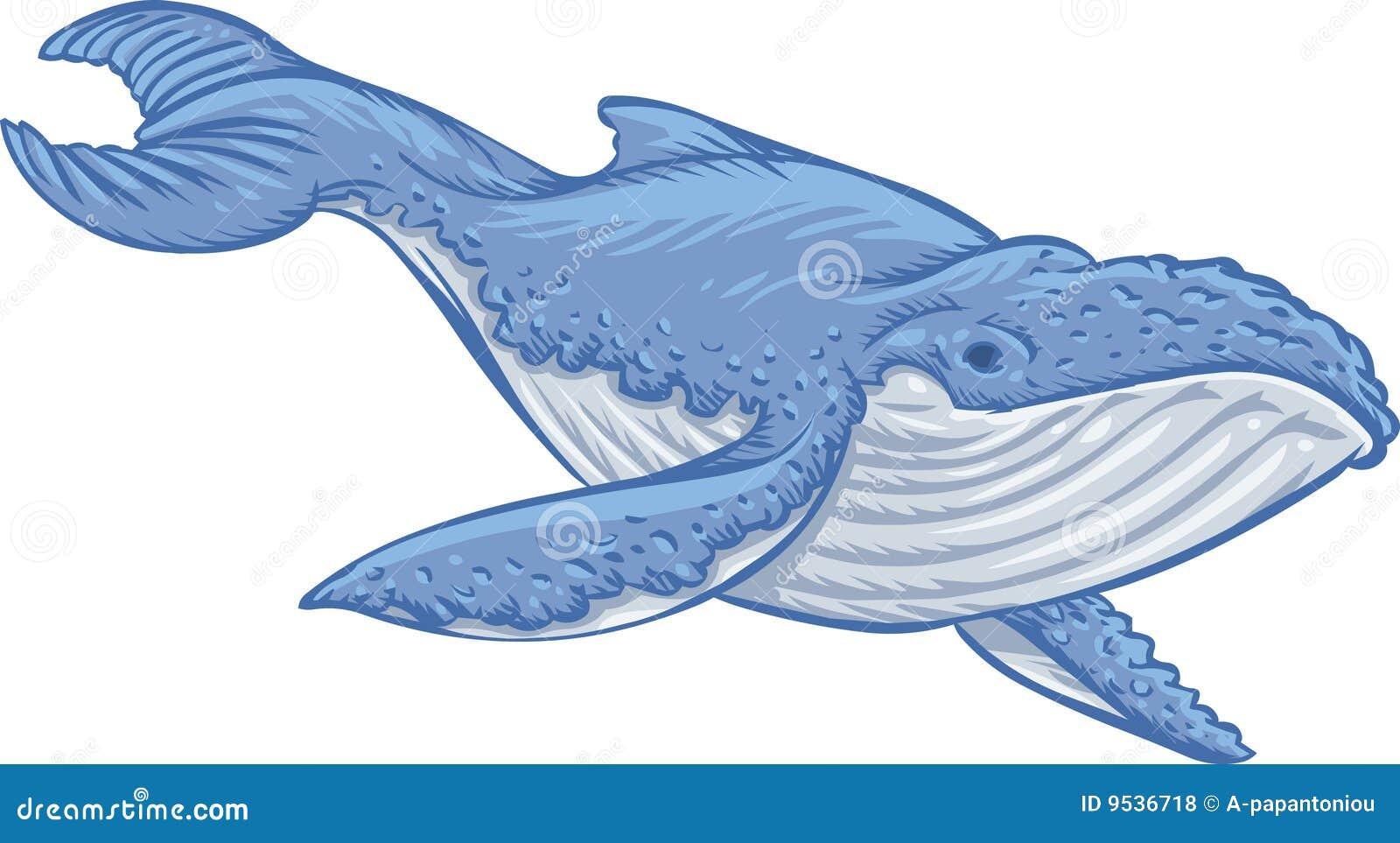 Lujoso Colorear Ballena Azul Modelo - Dibujos Para Colorear En Línea ...