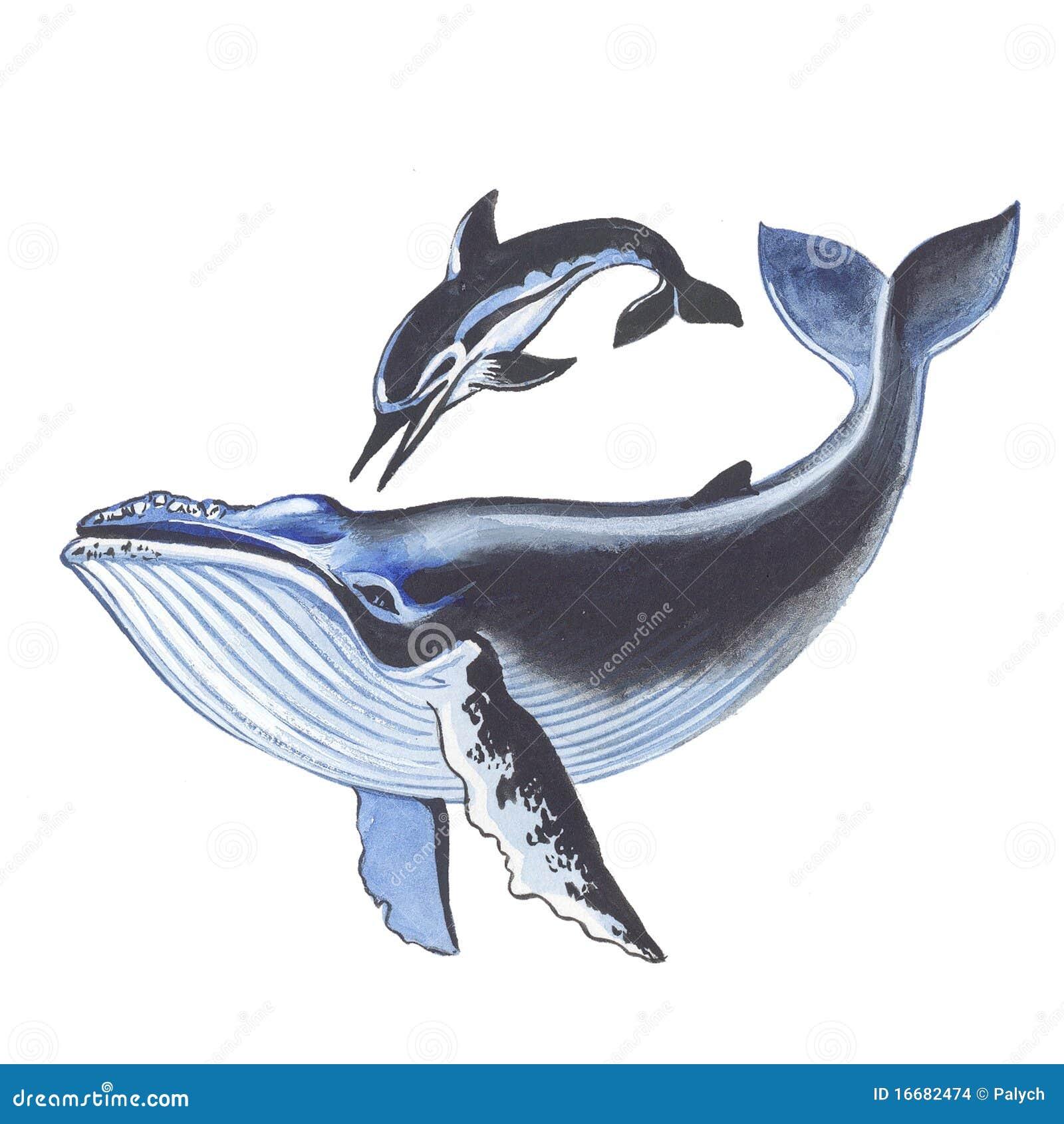 delfin ballena:
