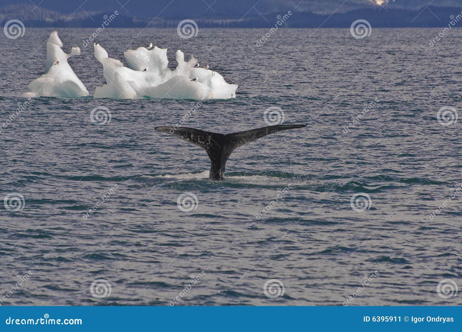 Ballenas, pájaros e icebergs