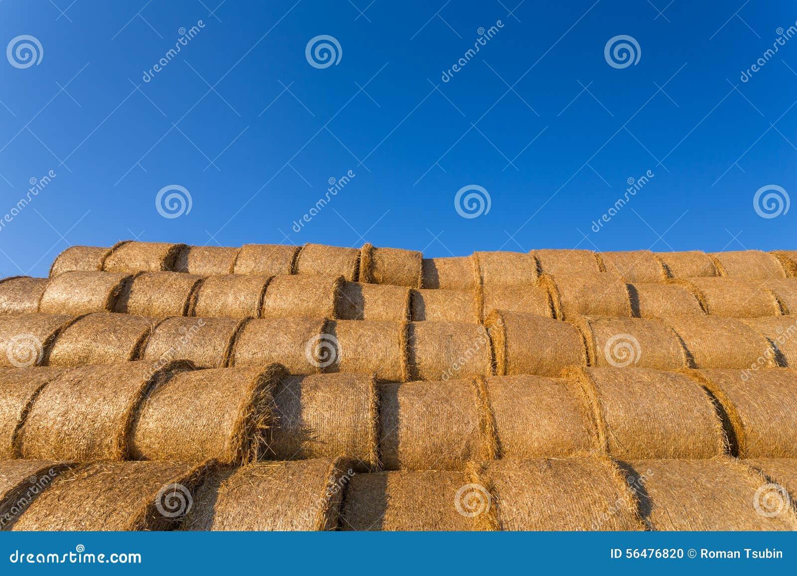Balles de foin empilées sur un champ contre le ciel bleu