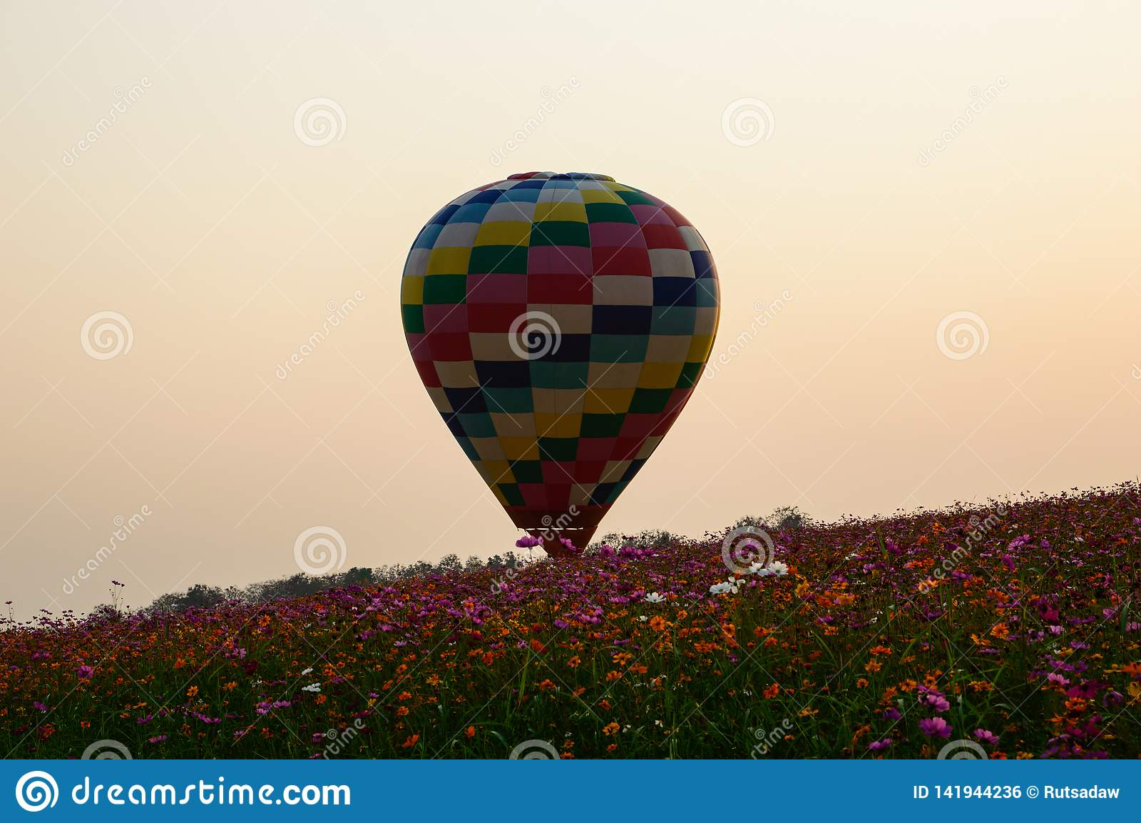 Ballons colorés du gisement de cosmos au coucher du soleil