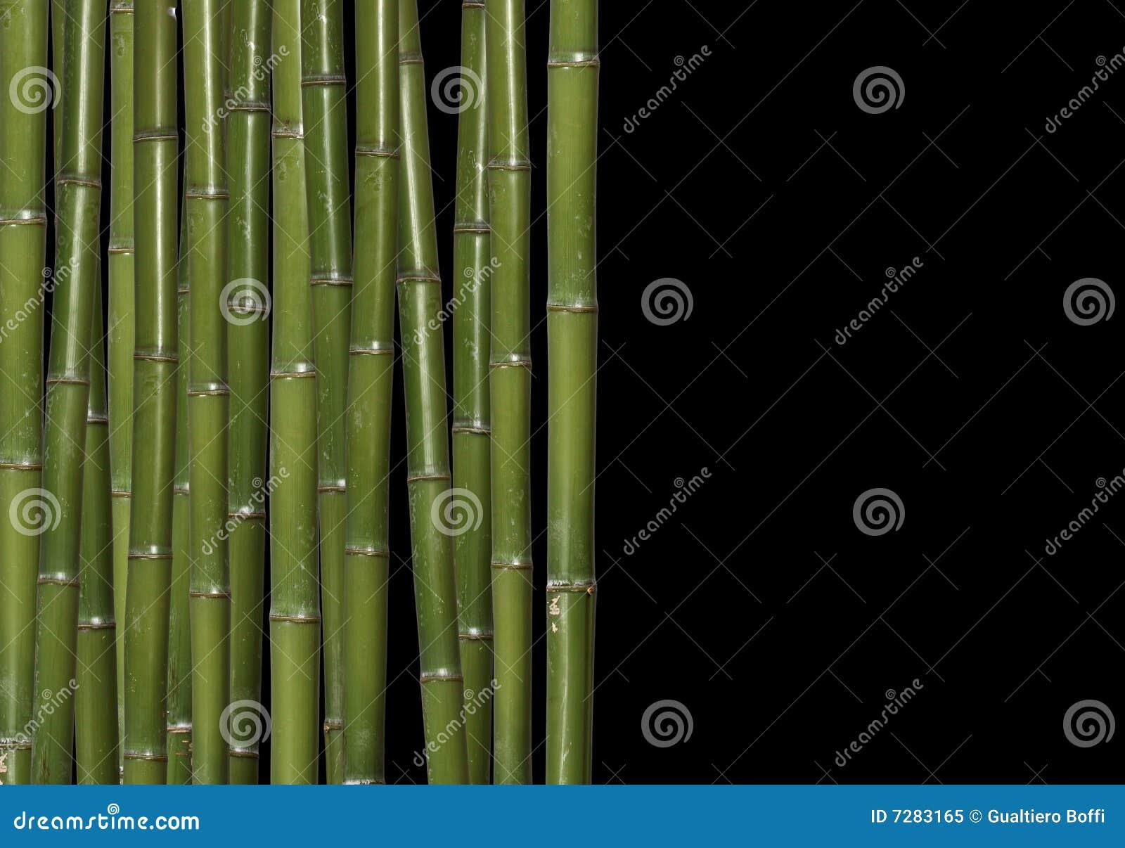 Bambú duro