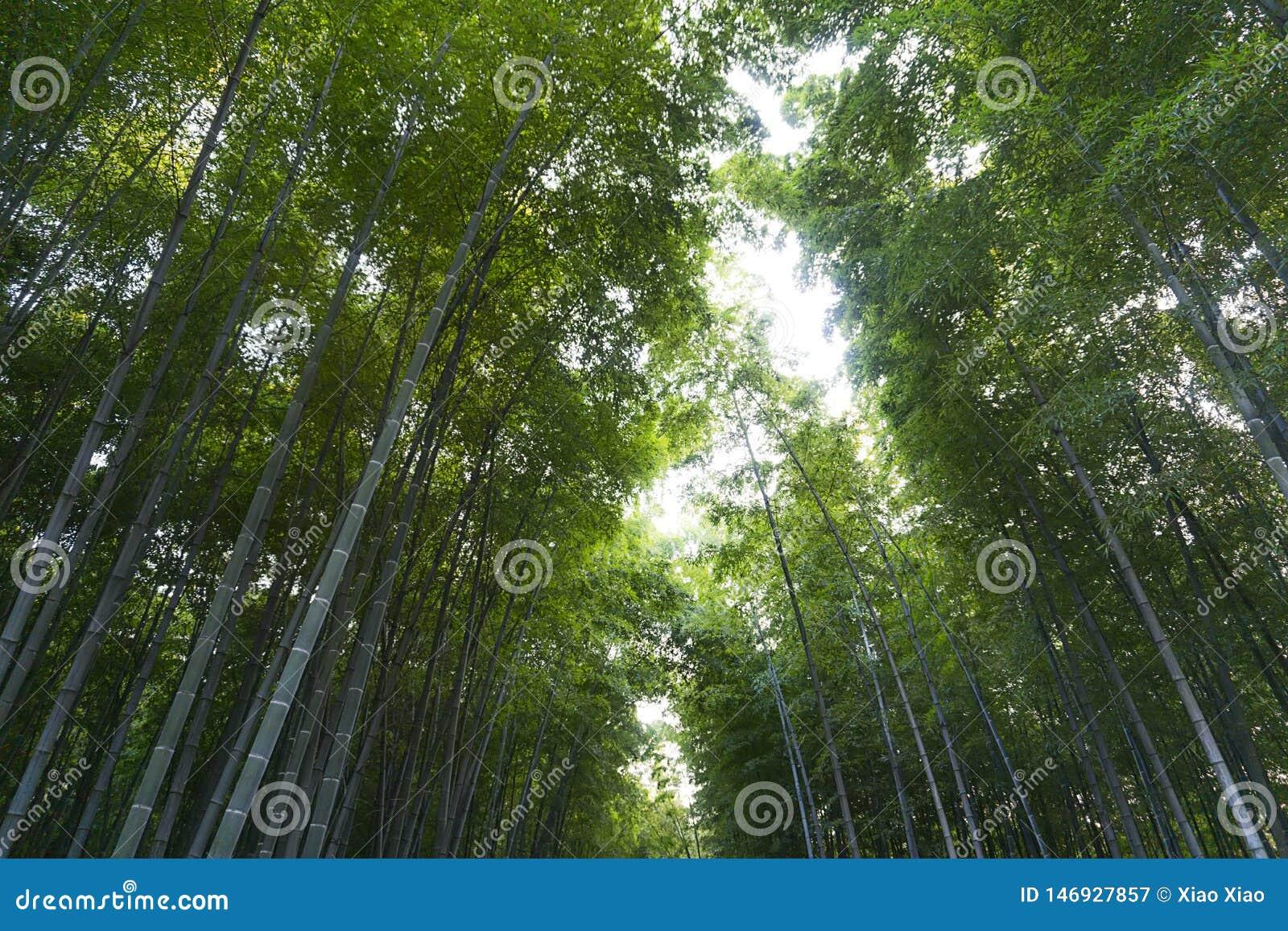 Bamb? m?s forrest