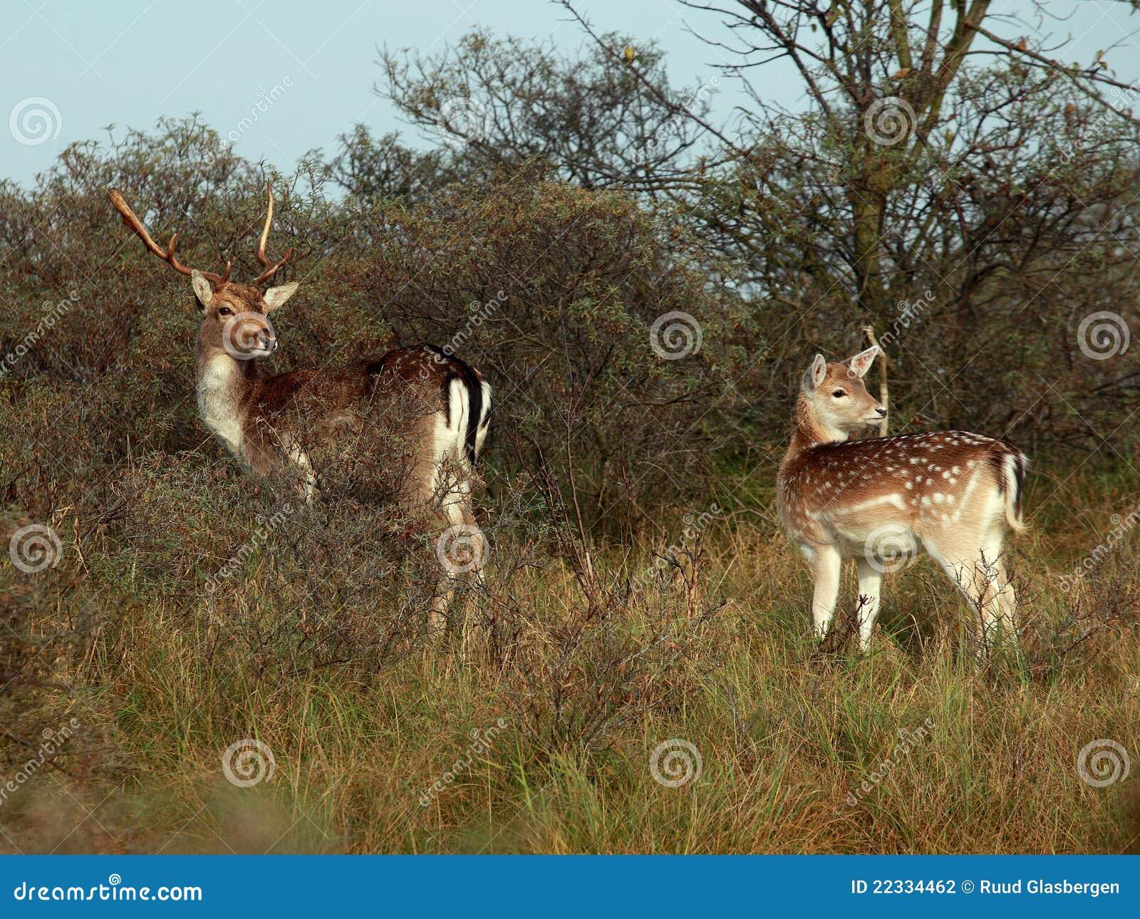Bambi森林