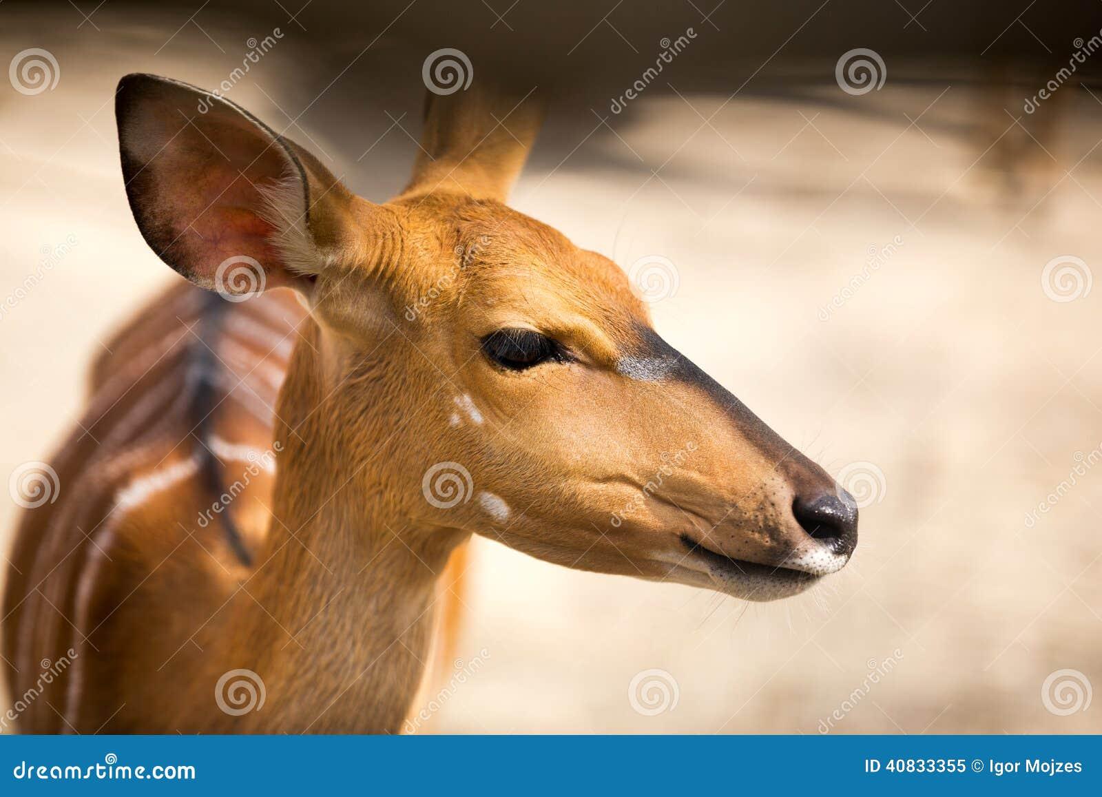 Bambi画象