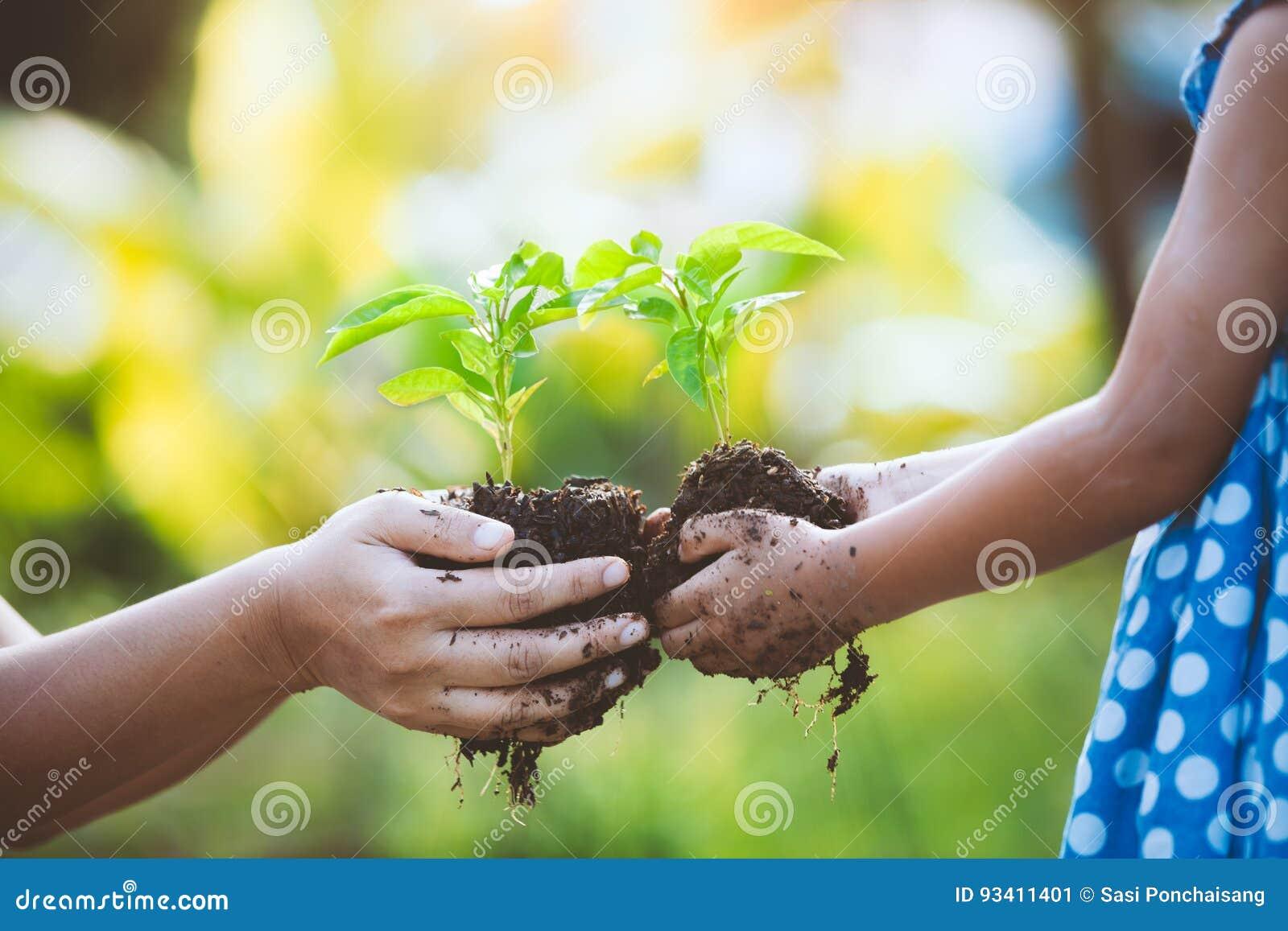 Bambina del bambino e plantula della tenuta del genitore in mani