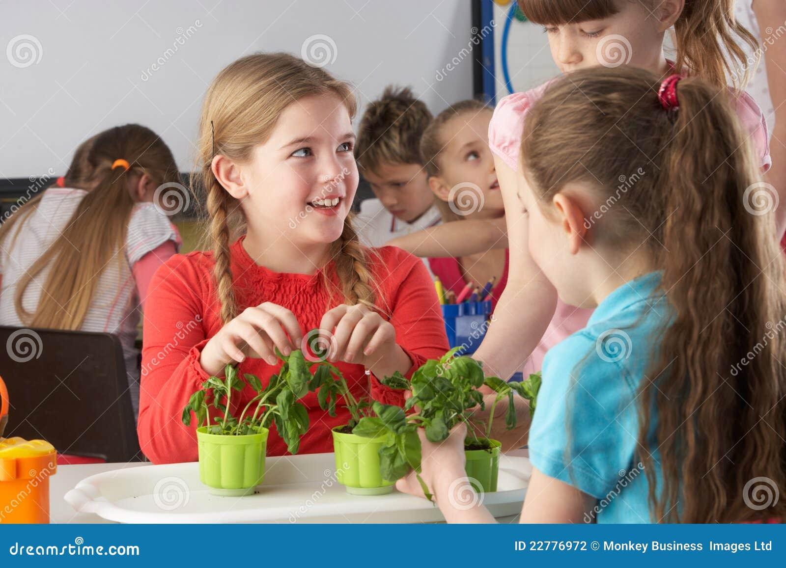 Bambini che imparano circa le piante nel codice categoria di banco