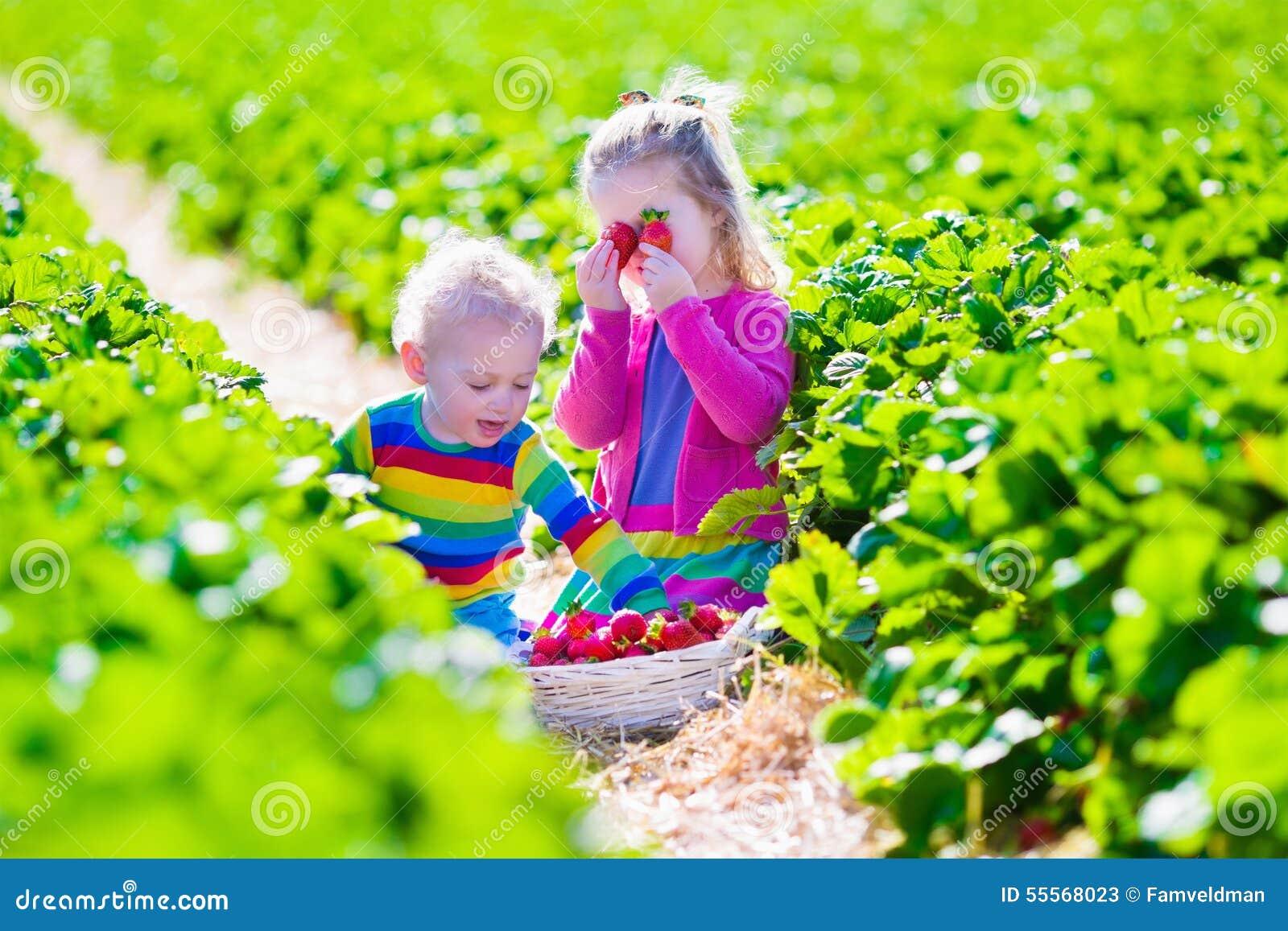 Bambini che selezionano fragola fresca su un azienda agricola