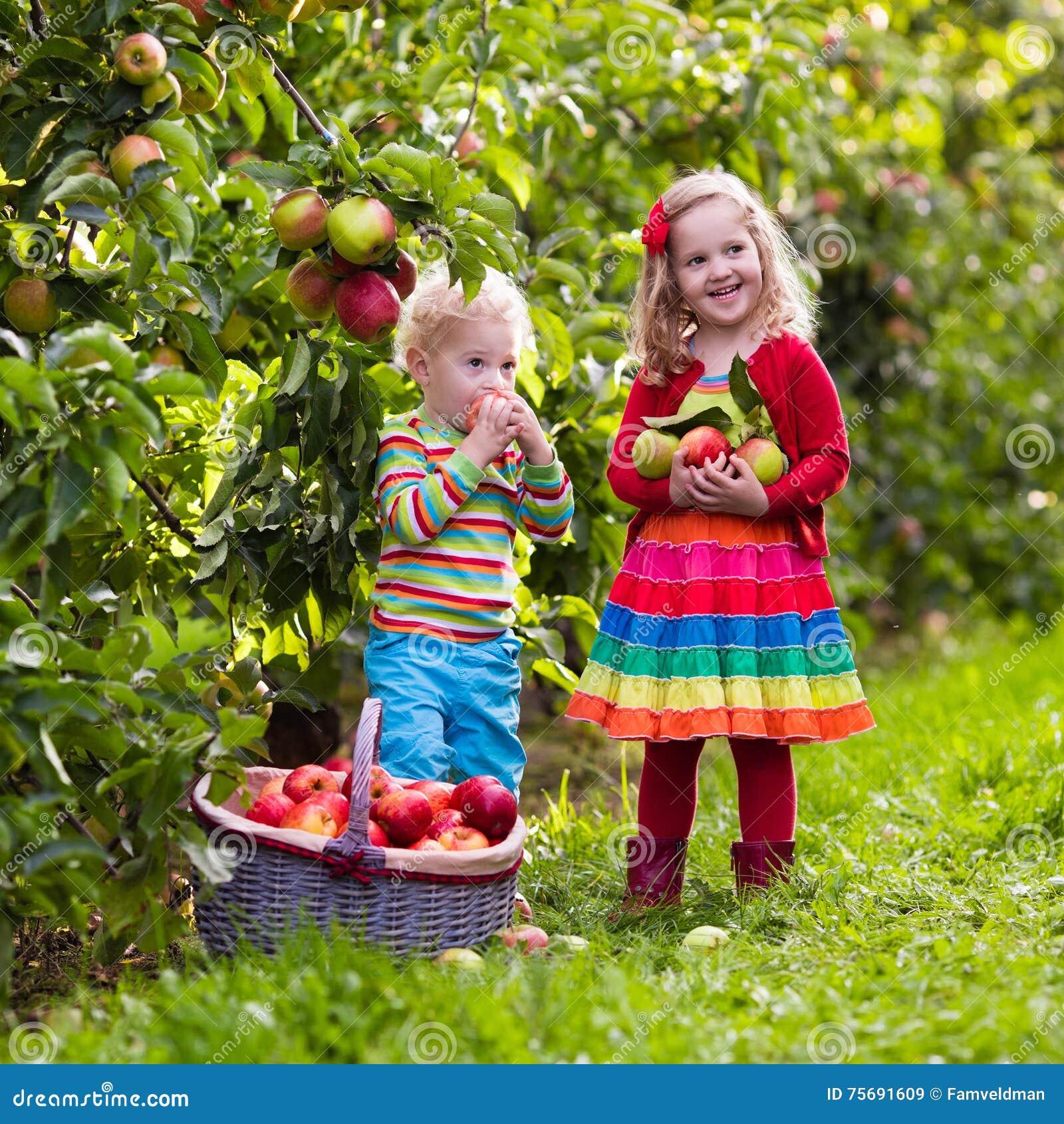 Bambini Che Selezionano Le Mele Nel Giardino Della Frutta