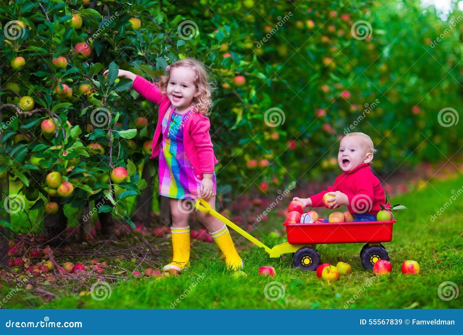 Bambini che selezionano mela su un azienda agricola
