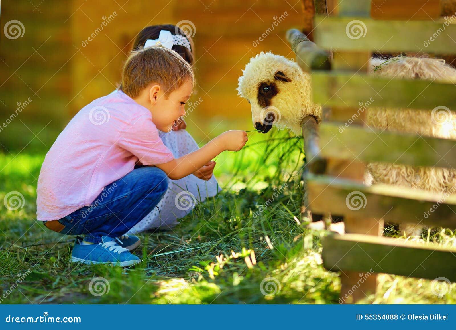 Bambini svegli che alimentano agnello con erba, campagna