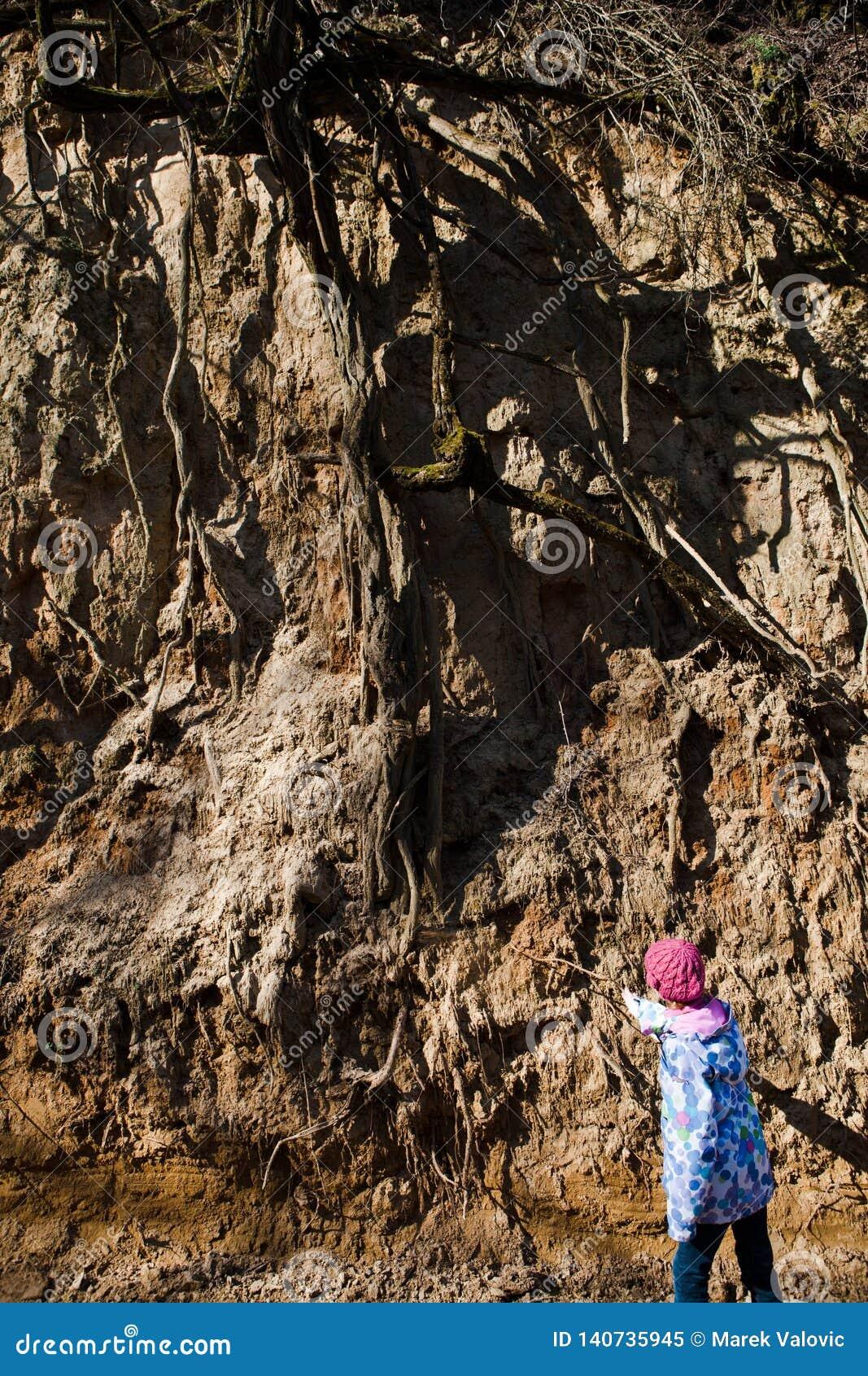 Bambino che controlla il sistema della radice - erosione del suolo