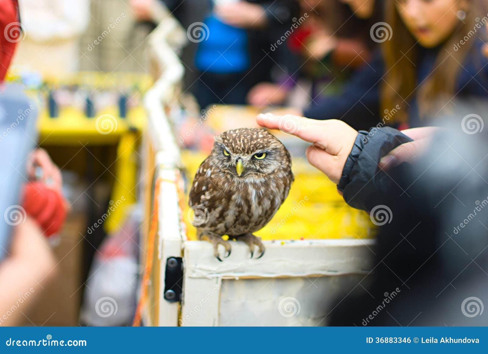 Download Bambino Che Gioca Con Il Gufo Fotografia Editoriale - Immagine di uccello, diritti: 36883346
