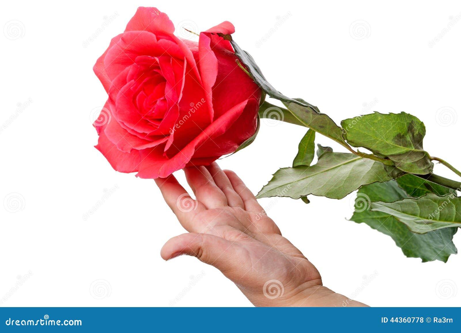 Bambino con una rosa rossa