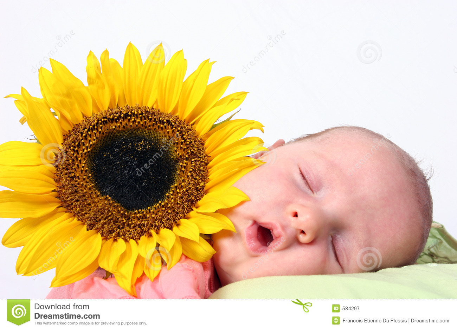Bambino del girasole