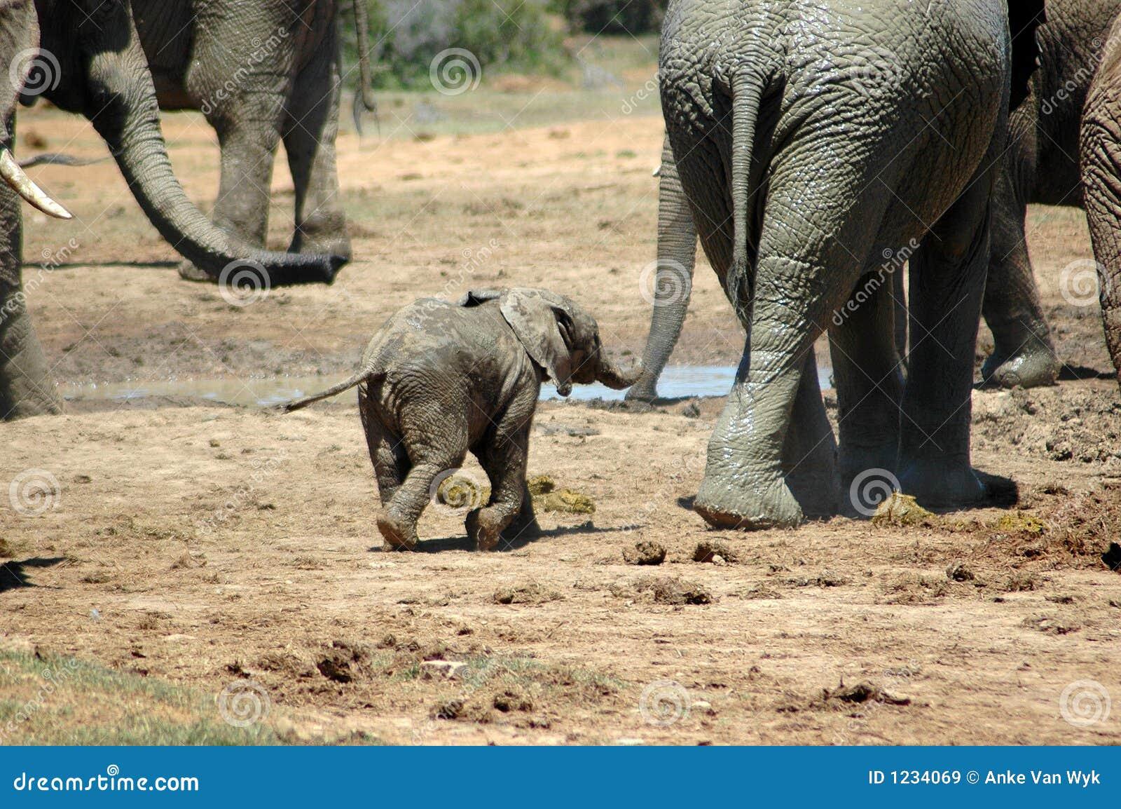 Bambino dell elefante
