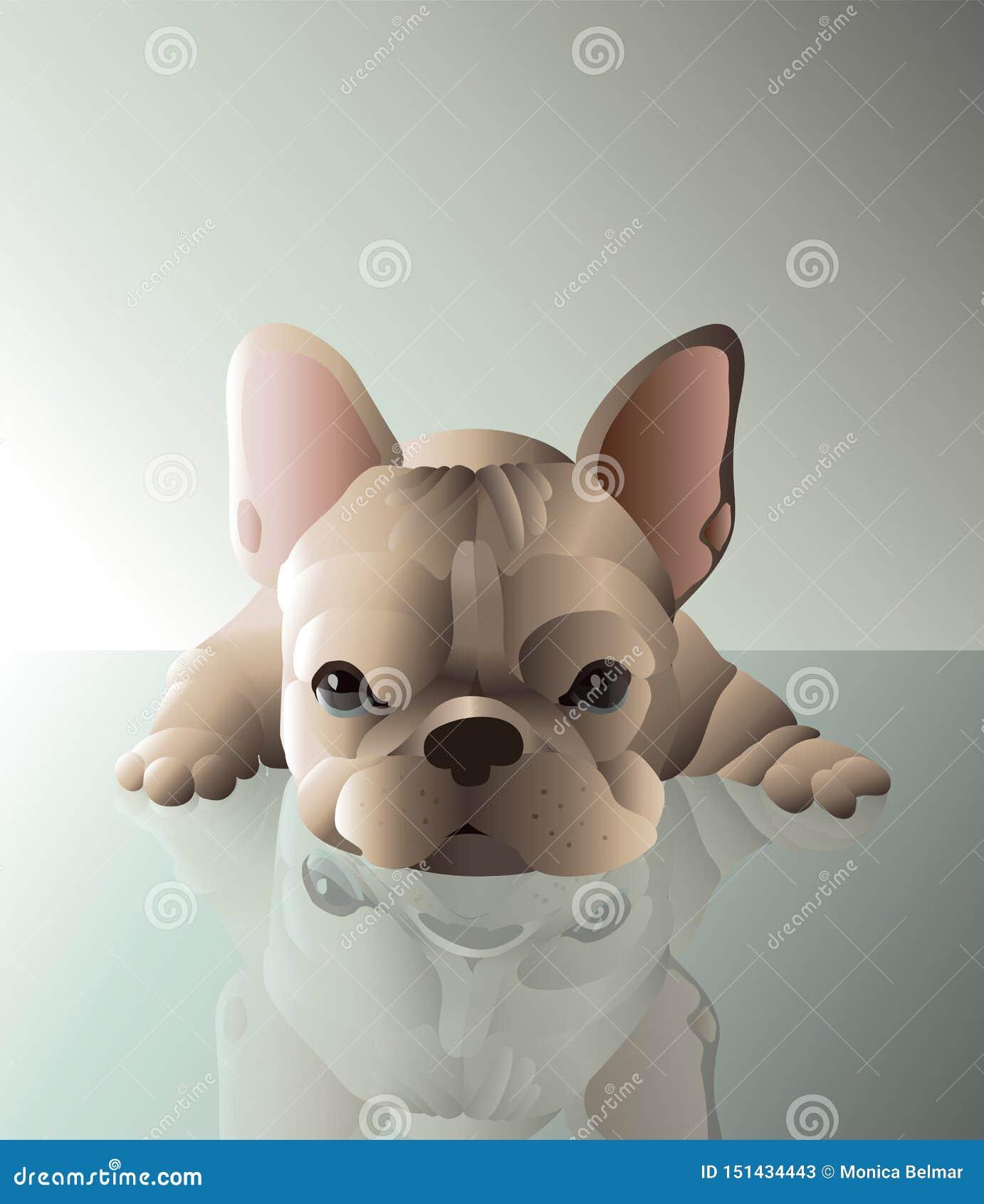 Bambino francese del cane del toro Colore marrone chiaro