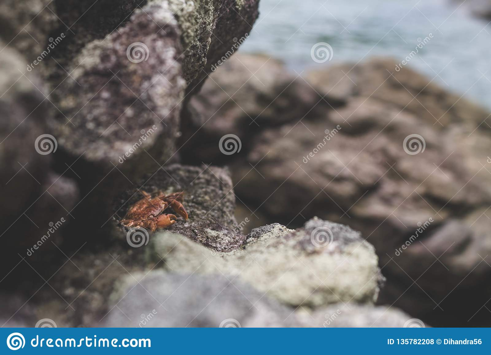 Bambino minuscolo del granchio sotto le rocce sulla spiaggia