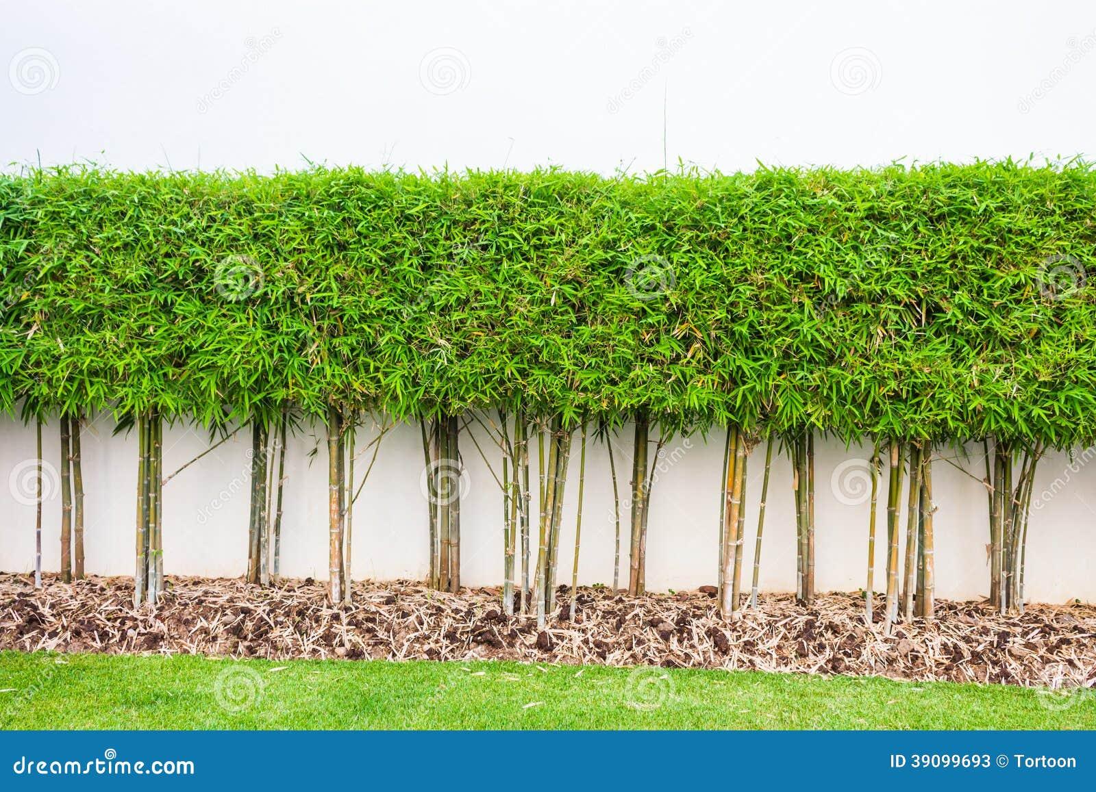 Bamboeinstallatie en de groene achtergrond van de grasmuur