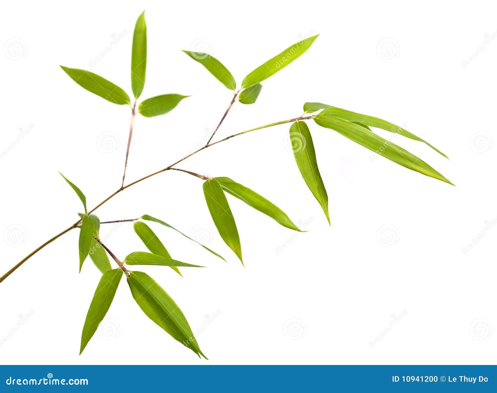 Bamboo ветвь