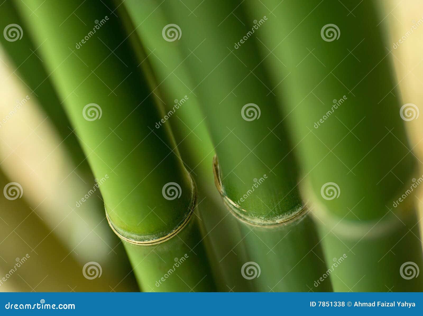 Bamboo завод