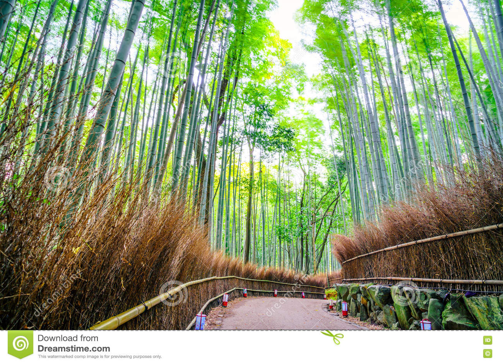 Download Bamboo пуща в Японии стоковое фото. изображение насчитывающей японско - 72297634