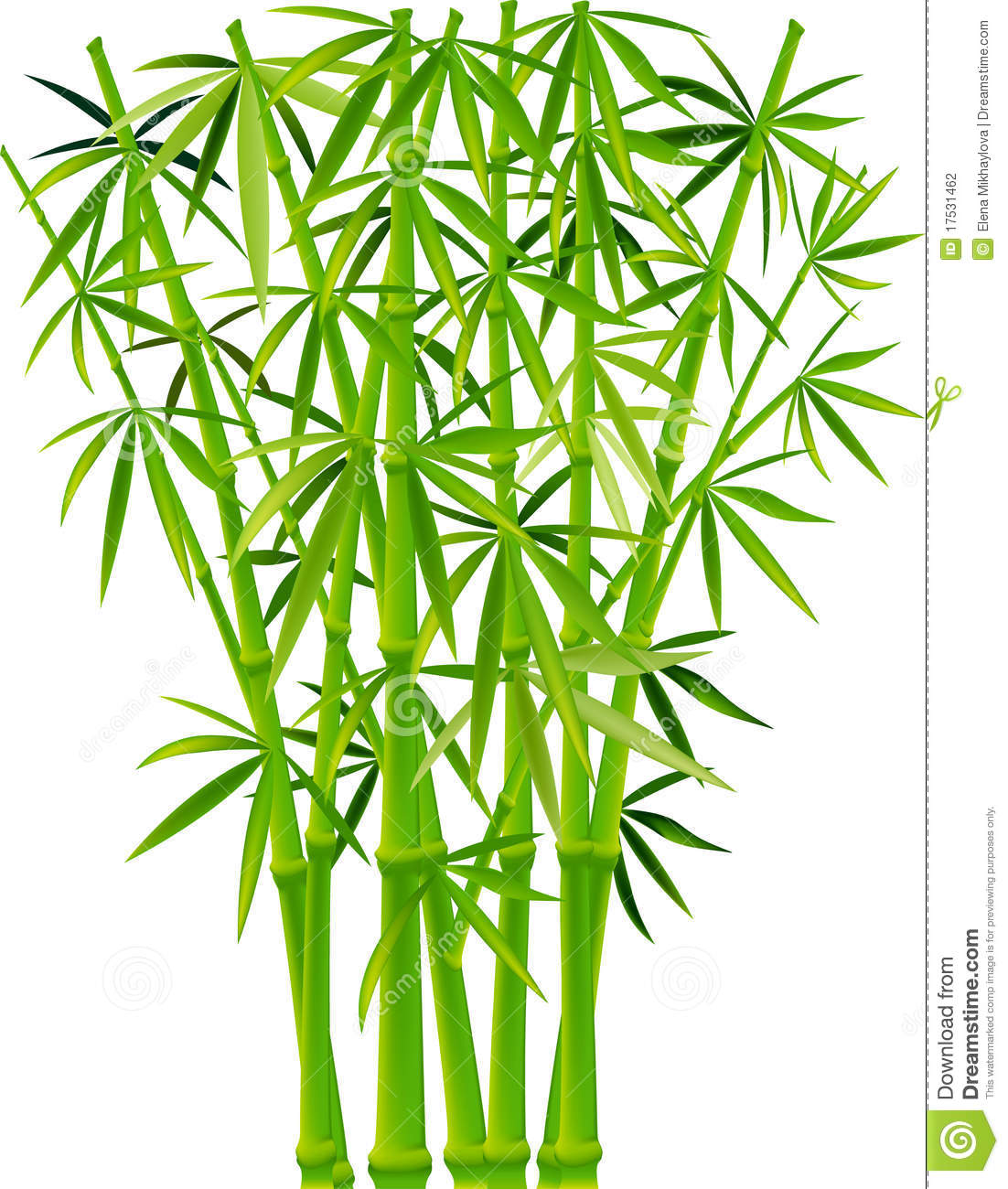 Bamboo Art Design : Bamboo stock vector illustration of image plant summer