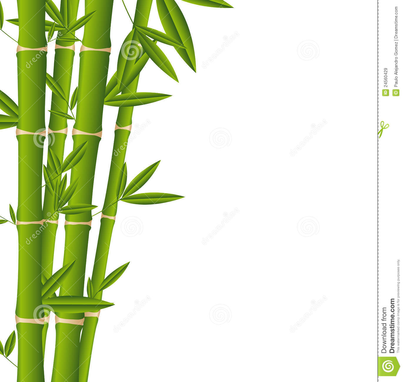 Bamboo royalty free stock images image