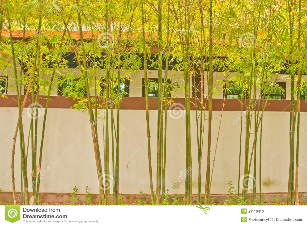 Bamboo Around The House Stock Photo Image Of Tree Leaves